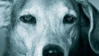 Epilepsy-dogs